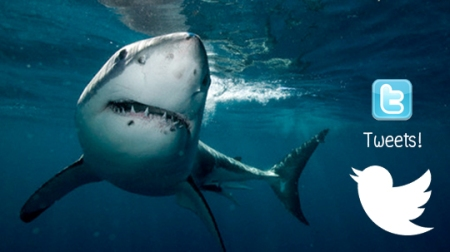 shark00
