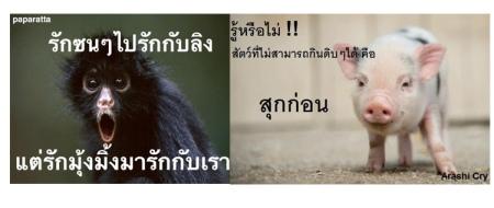 animal-03